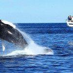 A Look at What Whale Watching is All About
