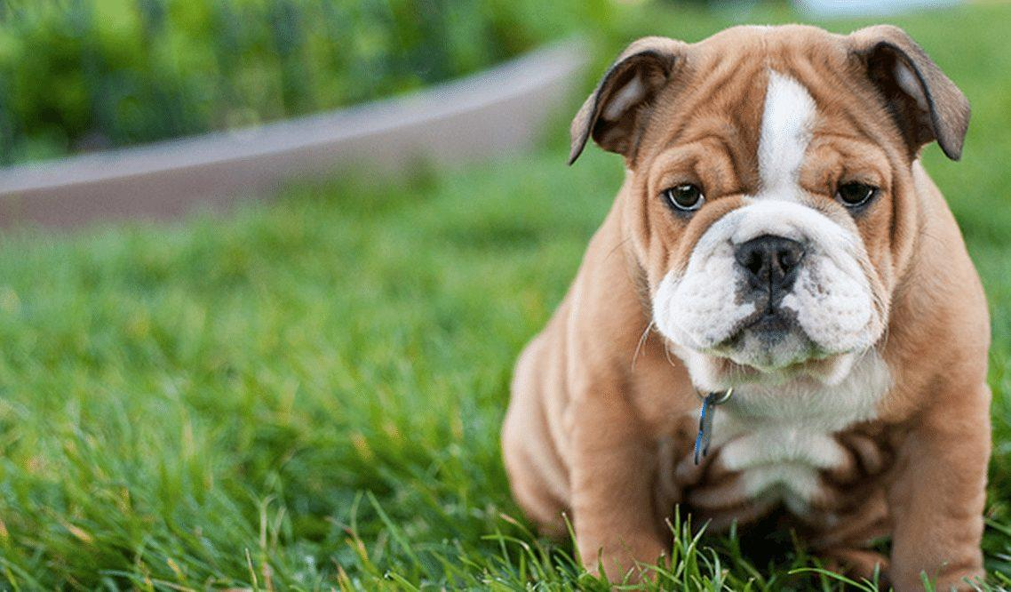 5 Things You Should Know Before Getting a Dog
