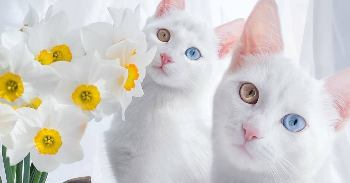 The Most Beautiful Cats You've Ever Seen!