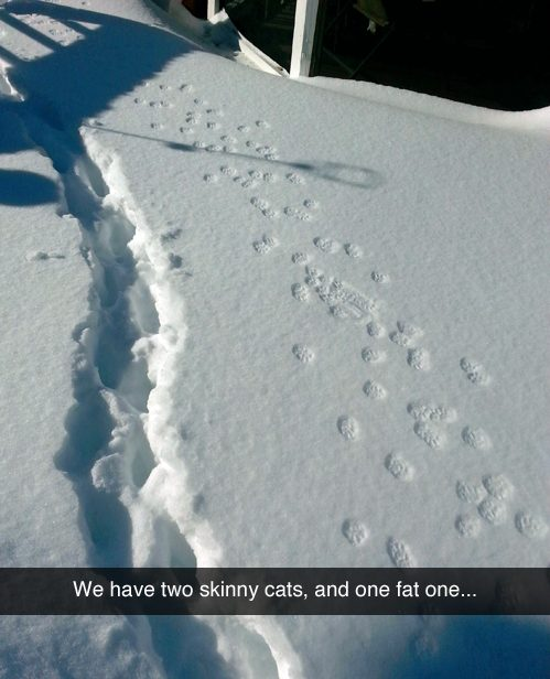 Fat Cat in Some Snow!