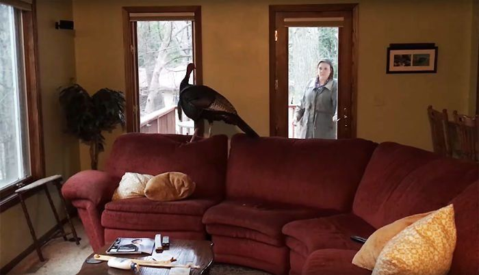 Couple Returns Home From Vacation, and Finds an Unexpected Guest in their Home.