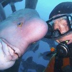 Japanese diver visits his friend fish for 25 years!