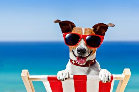 Help Your Dog Beat the Heat This Summer!
