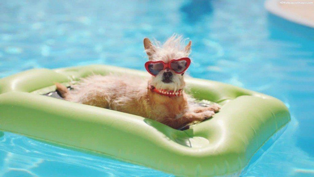 20 Ways To Keep Your Pet Safe This Summer