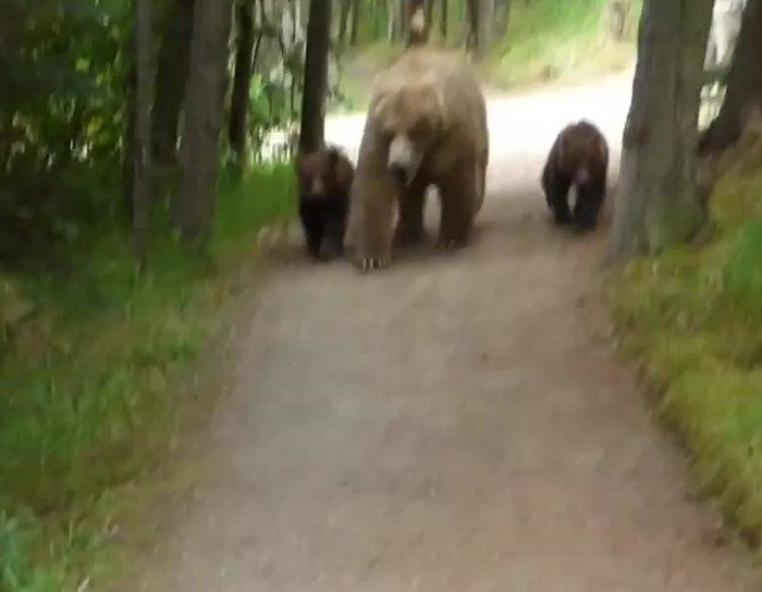 Guy nervously narrates his encounter with a grizzly and her cubs.
