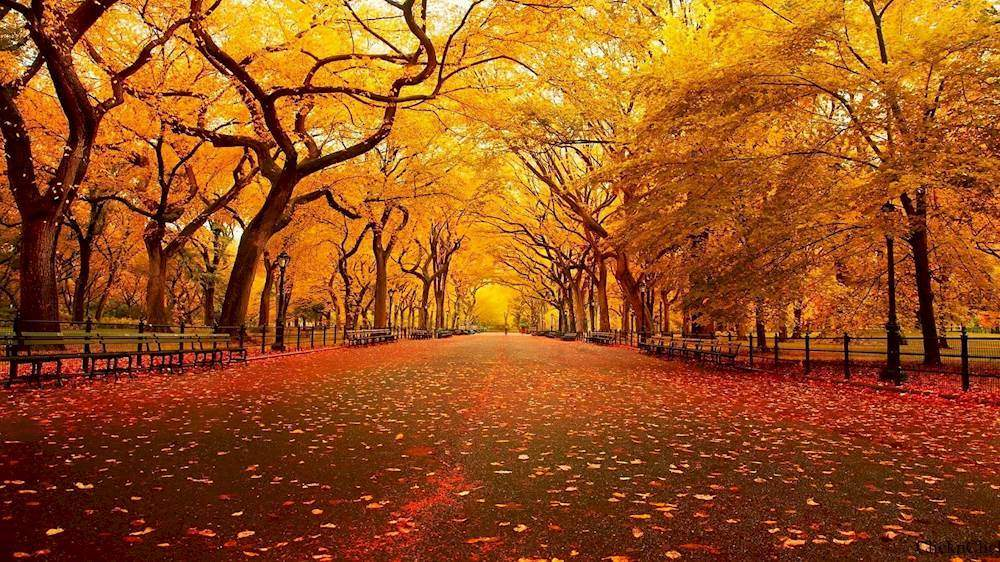7 Reasons Why Fall Is the Best Season of Them All