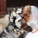 This Is The Epic Cuteness That Ensues When Your Wedding Party Is Made Up Of Dogs