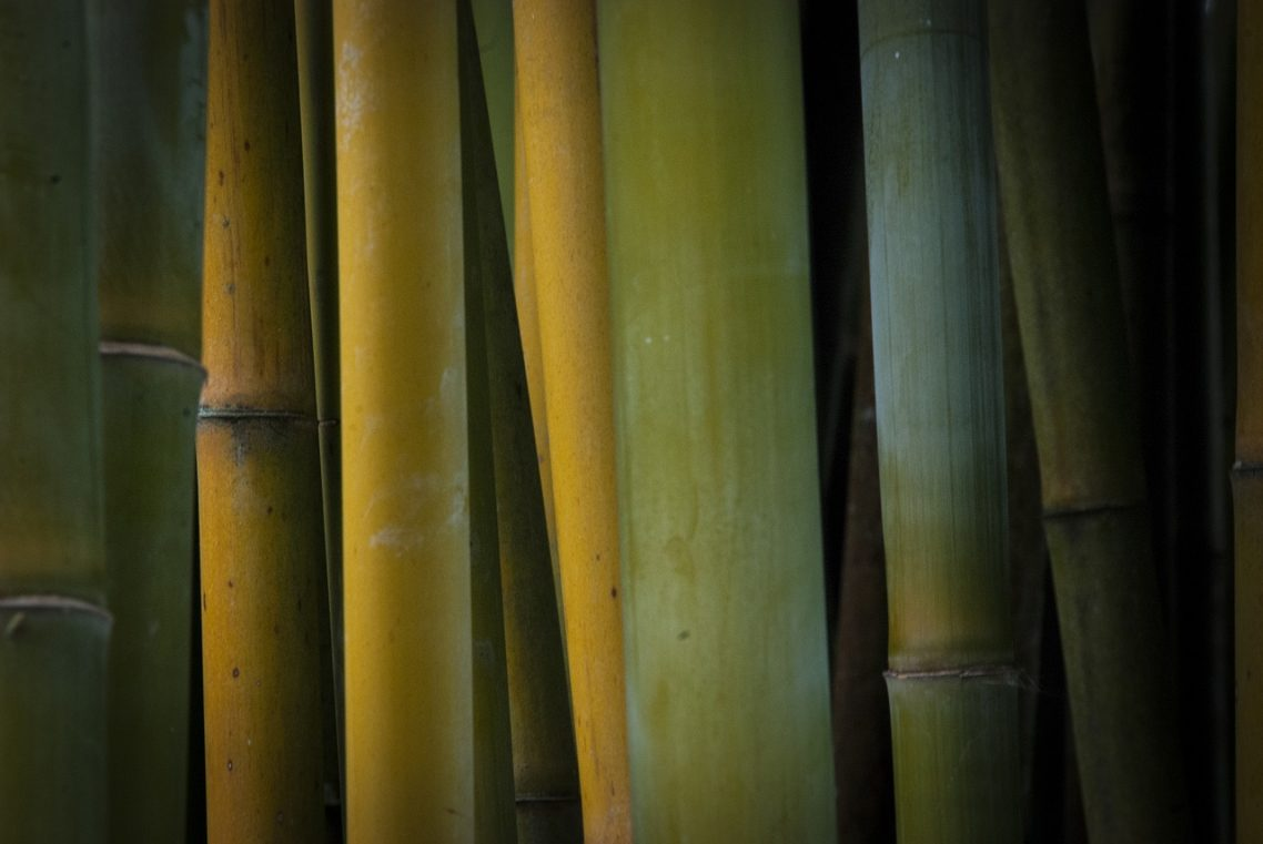 Proper Lucky Bamboo Plant Care