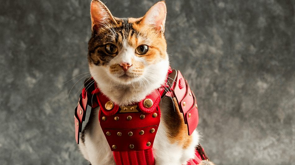 Now your pets can pledge their loyalty to you, in samurai armor!