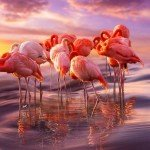 10+ Amazing Flamingo Pics To Celebrate Pink Flamingo Day.