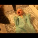 Baby can't contain her excitement when she sees a cat.