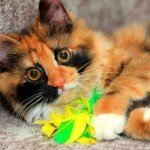 6 Cute DIY Catnip Toys for Your Cat