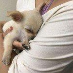 Puppy Abandoned At The Airport Had A Heartbreaking Note From His Owner, And Itll Make You Cry