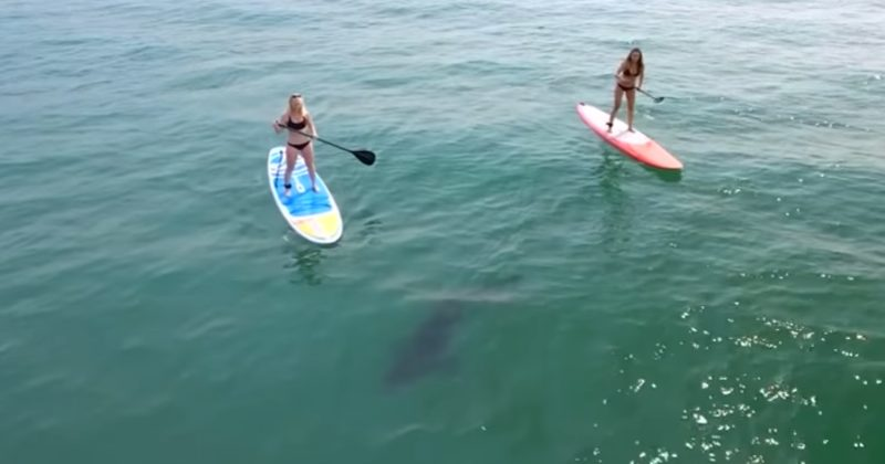 They Were Paddleboarding When They Saw Something Scary Lurking Underwater