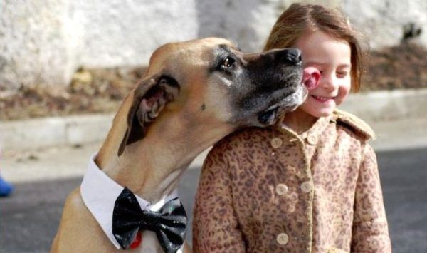 17 Truths That Prove Once and for All That Dogs Are Family