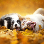 Dogs Who Really Love Autumn