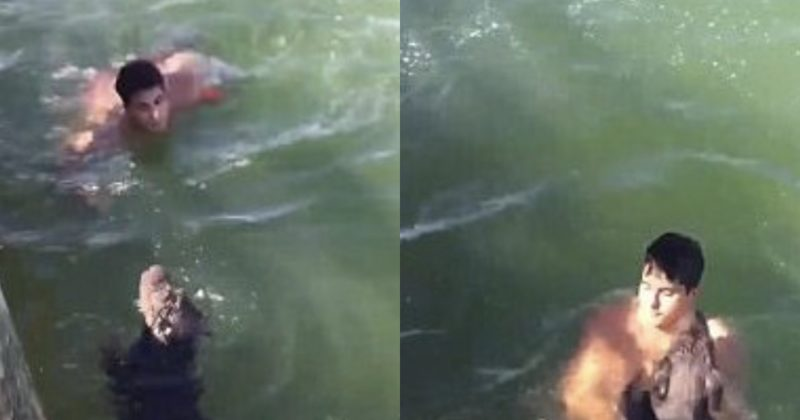 This Senior Dog Fell Into The Water And Was Drowning. Then A Fireman Saved The Day!