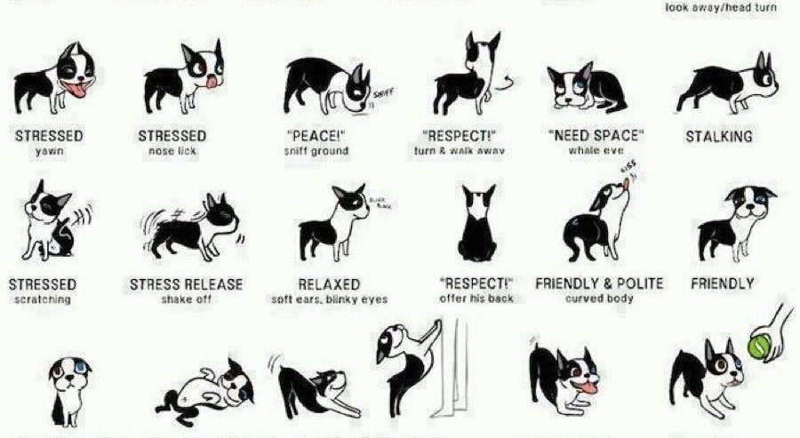 The Importance of Maintaining a Healthy Communication With Your Dog 1