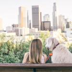 Tips for Having a Dog in a Big City